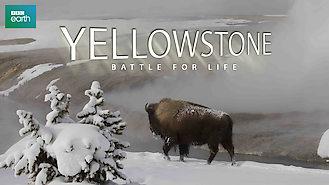 Is Yellowstone: Battle for Life, Season 1 (2009) on Netflix USA